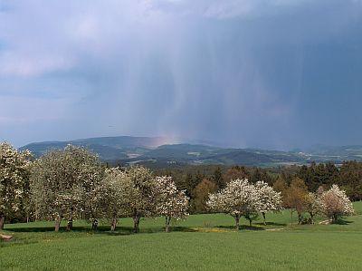 Blhende_Obstbume_-_Regenschauer_in_der_Ferne.jpg